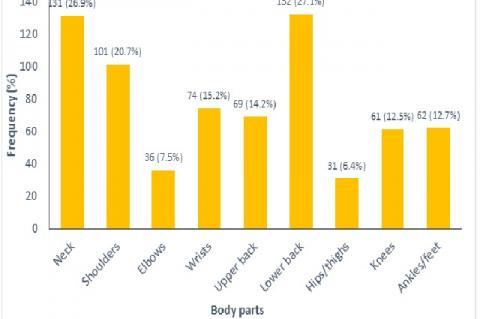 Distribution of participants based on musculoskeletal discomfort in the last 12 months